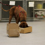 Lessons from the Dog Food Recall