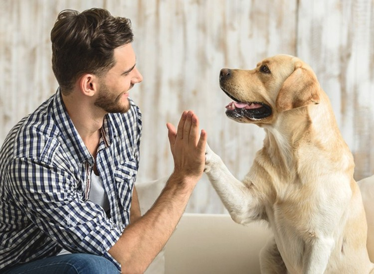 Pet Friendly Ways To Effectively Pest Proof Your Home