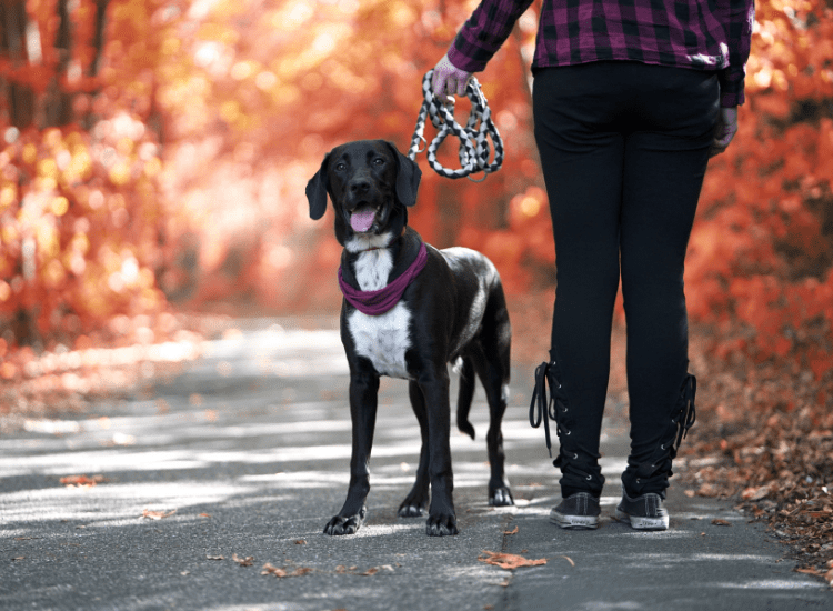 What to Do if Your Dog Pulls Too Much on His Leash